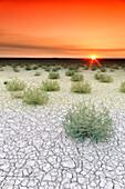 Bushes and cracked soil of Villafafila Natural Park at moody sunset, Zamora, Spain