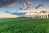 Italy, Tuscany, Orcia valley, sunrise at farmhouse Poggio Covili, Castiglione d'Orcia, provence of Siena