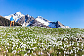 Panorama of cyclist with mountain bike framed by crocus in bloom Albaredo Valley Orobie Alps Valtellina Lombardy Italy Europe