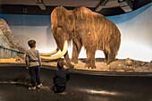 Children look the mammoth from the glass window, Zoological Museum, University of Copenhagen, Denmark