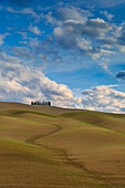 San Quirico d'Orcia cypresses, Val d'Orcia, Tuscany, Italy