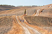 Europe,italy,Tuscany,Siena district,Orcia valley
