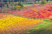 The countryside near Castelvetro, Modena Province, Emilia Romagna, Italy