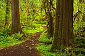 Delta Nature Trail, Willamette National Forest, Oregon.