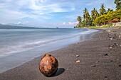 Coconut beach, Ketapang, Java, Indonesia, Asia.