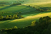 Spring afternoon in South Downs National Park, East Sussex, England.