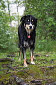 Wet Black Dog on Grassy Path