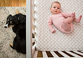 High Angle View of Baby Laying in Crib with Dog Laying Nearby on Floor