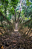 Hand made vine bridge in the Dzanga-Sangha Park, UNESCO World Heritage Site, Central African Republic, Africa