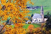 Tree with yellow leaves with the church of Santa Magdalena in the background, Funes Valley, Sudtirol (South Tyrol), Dolomites, Italy, Europe