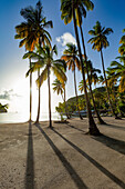 Tall palms and long shadows on the small beach at Marigot Bay, St. Lucia, Windward Islands, West Indies Caribbean, Central America