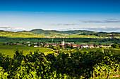 Wine village and cultural landscape in autumn, Burkheim, Vogtsburg im Kaiserstuhl, Baden-Württemberg, Germany