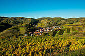 Village in the vineyards in autumn, Schelingen, Kaiserstuhl, Baden-Württemberg, Germany
