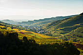 Hills and vineyards, Oberrotweil, Kaiserstuhl, Baden-Württemberg, Germany