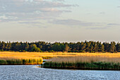 Nature trail at Darsser Ort, Ostseeküste, Mecklenburg-Western Pomerania, Germany