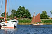 Zeesenboot sail on the Bodden, Fischland, Ostseeküste, Mecklenburg-Western Pomerania, Germany