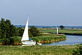 Sailboat on Prerower Strom, Darss, Ostseeküste, Mecklenburg-Western Pomerania Germany