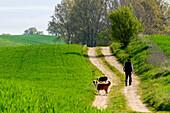 Man with dogs goes for a walk, Klützer Winkel, Ostseeküste, Mecklenburg-Vorpommern Castle Bothmer Germany