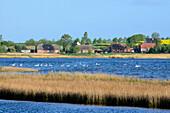 Insel Poel, view of Salzhaff, Baltic Sea coast, Mecklenburg-Western Pomerania Germany