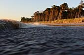 Waves at Darsser Weststrand, Baltic Sea Coast, Mecklenburg-Western Pomerania Germany