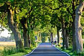 Alley with cyclist near Cape Arkona, Rügen, Baltic Sea coast, Mecklenburg-Western Pomerania Germany