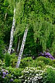 Rhododendronpark (Kurpark) in Graal-Müritz, Baltic Sea Coast, Mecklenburg-Vorpommern, Germany