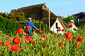 Flower meadow with cyclist in Ahrenshoop, Fischland, Ostseeküste, Mecklenburg-Western Pomerania Ostseeküste, Germany