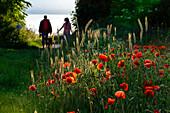 Flower meadow with strollers in Ahrenshoop, Fischland, Ostseeküste, Mecklenburg-Western Pomerania Ostseeküste, Germany