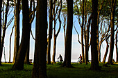 Cyclist in the ghost forest near Nienhagen, Ostseeküste, Mecklenburg-Western Pomerania Germany