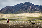 Kyrgyz women and yak, Pamir, Afghanistan, Asia