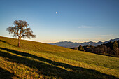 Moon over the bavarian foothills of the Alps, Bad Kohlgrub, Upper Bavaria, Germany