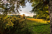Summer evening with sunset in bavarian countryside, Bad Kohlgrub, Upper Bavaria, Germany