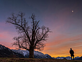 A man stands at the blue hour on a hill next to a tree and looks towards Karwendel and Wetterstein mountains, Eschenlohe, Upper Bavaria, Germany
