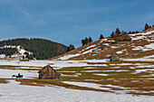 Two women ride through the snowy hills of the Ammergau Alps, Unterammergau, Upper Bavaria, Germany