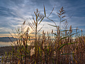 View through the reeds to the sunset over the Chiemsee and the Chiemgau Alps, Chieming, Upper Bavaria, Germany