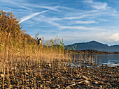 View through the reeds to a viewing platform on Lake Chiemsee, in the background the Chiemgau Alps, Chieming, Upper Bavaria, Germany