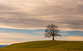 A leafless tree on a hill on a sunny winter day, left a section of the Wettersteingebirge, Münsing, Upper Bavaria, Germany