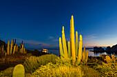 Mexican giant cardon (Pachycereus pringlei) at night, Isla Santa Catalina, Baja California Sur, Mexico, North America
