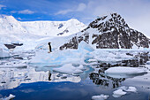 Gentoo penguin on an iceberg reflected in calm waters of sunny Neko Harbour, mountain and glacier backdrop, Antarctica, Polar Regions