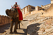 An elephant and its rider walk the walls of the Amber Fort, Jaipur, Rajasthan, India, Asia