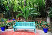 Jardin Majorelle (Majorelle Gardens), restored by fashion designer Yves Saint Laurent, Marrakesh (Marrakech), Morocco, North Africa, Africa