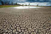 A nearly dry waterhole in the semi arid Kinchega National Park