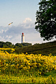 Flower meadow in front of Lighthouse Dornbusch on Hiddensee, Ruegen, Baltic Sea coast, Mecklenburg-Vorpommern, Germany