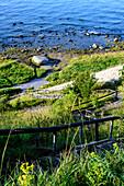 Steep coast and Gellort, Cape Arkona, Ruegen, Ostseekueste, Mecklenburg-Vorpommern, Germany