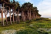 Landscape at the lighthouse Hellen in the evening light, Hiddensee, Ruegen, Baltic Sea coast, Mecklenburg-Vorpommern, Germany