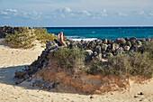 Beach in the Parque Natural de las Dunas de Corralejo, Fuerteventura, El Jable, Canary Islands, Islas Canarias, Atlantic Ocean, Spain, Europe