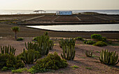 Morning at the Museum of Salt at Las Salinas near Caleta de Fustes, Fuerteventura, Canary Islands, Islas Canarias, Atlantic Ocean, Spain, Europe