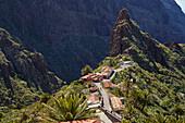 Blick über üppiges Grün auf Masca, Teno Gebirge, Teneriffa, Kanaren, Kanarische Inseln, Islas Canarias, Atlantik, Spanien, Europa