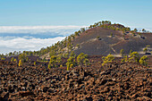 Montana Samara, Parque Nacional del Teide, Natural Heritage of the World, Tenerife, Canary Islands, Islas Canarias, Spain, Europe
