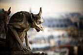 A carved stone gargoyle from the Galerie des Chim??res, sits on top of Notre Dame Cathedral.